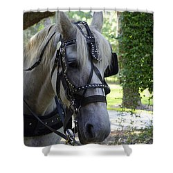 Jekyll Horse Shower Curtain by Laurie Perry