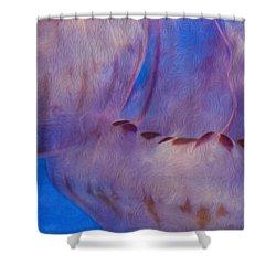 Jellies Shower Curtain by Jack Zulli