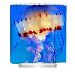 Jellyfish 3 Shower Curtain by Dawn Eshelman