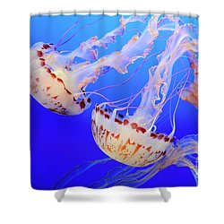 Jellyfish 9 Shower Curtain by Bob Christopher