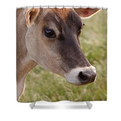 Jersey Cow Portrait Shower Curtain