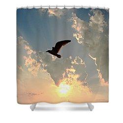 Jl Seagull Shower Curtain