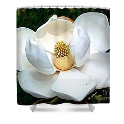 Shower Curtain featuring the photograph John's Magnolia by Barbara Chichester
