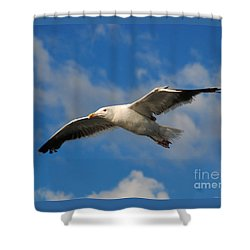 Jonathan Livingston Shower Curtain
