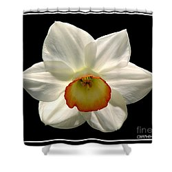 Shower Curtain featuring the photograph Jonquil 1 by Rose Santuci-Sofranko