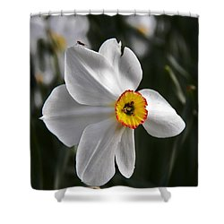 Jonquil Shower Curtain by Judy Via-Wolff