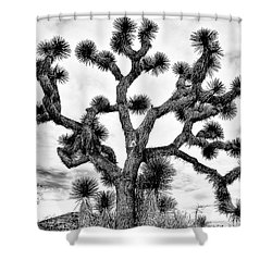 Shower Curtain featuring the photograph Joshua Black And White by Benjamin Yeager