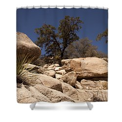 Joshua Tree Shower Curtain by Amanda Barcon