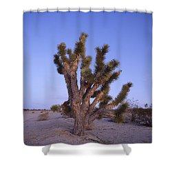 Solitude Of The Joshua Tree Shower Curtain by Shaun Higson