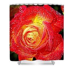 Joyful Rose Shower Curtain by Mariola Bitner
