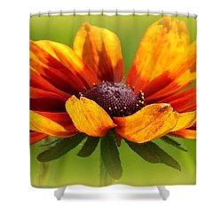 Judy Shower Curtain