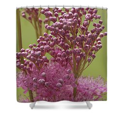 July Astilbe Shower Curtain