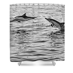 Jump For Joy - Common Dolphins Leaping. Shower Curtain by Jamie Pham