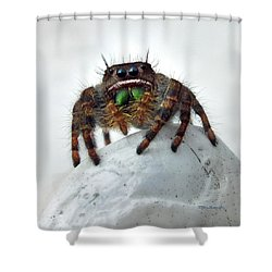 Jumper Spider 2 Shower Curtain