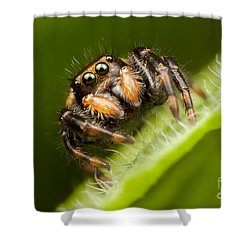 Jumping Spider Phidippus Clarus I Shower Curtain by Clarence Holmes