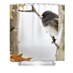 Junco And Oak Shower Curtain