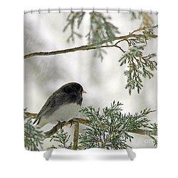 Shower Curtain featuring the photograph Junco In Snowstorm by Paula Guttilla