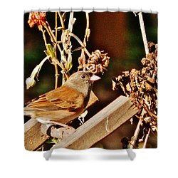 Shower Curtain featuring the photograph Junco Jaunt 2 by VLee Watson
