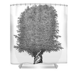 June '12 Shower Curtain