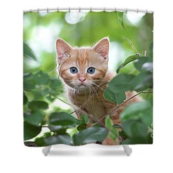 Jungle Kitty Shower Curtain by Debbie Green