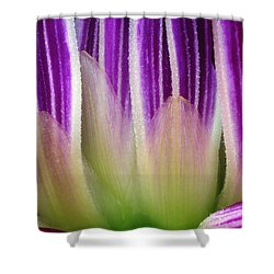 Shower Curtain featuring the photograph Just A Dahlia 1 by Wendy Wilton
