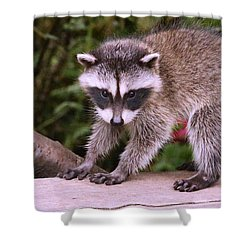 Just A New Fuzzy Little Feller Shower Curtain by Kym Backland
