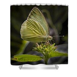 Just A Taste Shower Curtain by Jean Noren