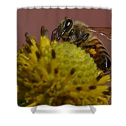 Just Bee Shower Curtain