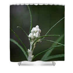 Shower Curtain featuring the photograph Just Budding by Denyse Duhaime