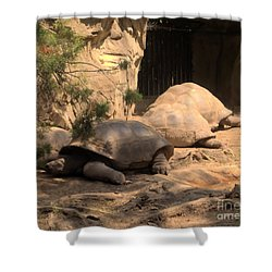 Just Chillin' Shower Curtain by Luther   Fine Art