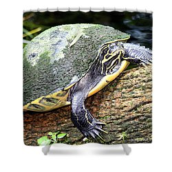 Shower Curtain featuring the photograph Just Chilling by Debra Forand