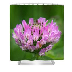 Just Clover Shower Curtain