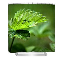 Just Green Shower Curtain