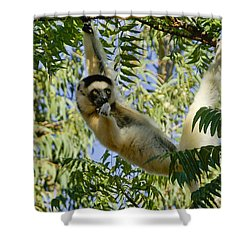 Just Hanging Around Shower Curtain by Michele Burgess