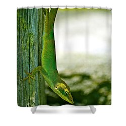 Just Hanging... Shower Curtain by Lehua Pekelo-Stearns