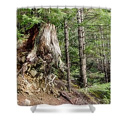 Just Hanging On Old Growth Forest Stump Shower Curtain by Roxy Hurtubise