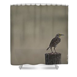 Western Meadowlark On A Fence Post Shower Curtain