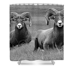 Just Hanging Out Shower Curtain by Vivian Christopher