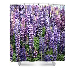 Just Lupins Shower Curtain by Nareeta Martin