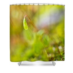 Just One Shower Curtain by Priya Ghose
