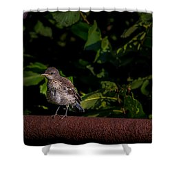 Just Out Of The Nest Shower Curtain