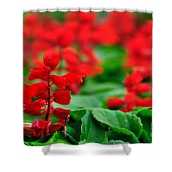 Just Red Shower Curtain by Kaye Menner