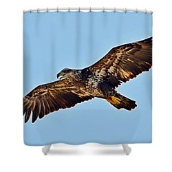 Juvenile Bald Eagle In Flight Close Up Shower Curtain by Jeff at JSJ Photography