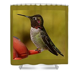 Shower Curtain featuring the photograph Juvenile Male Anna by Jay Milo