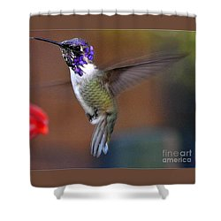 Shower Curtain featuring the photograph Juvenile Male Costa by Jay Milo