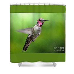 Shower Curtain featuring the photograph Juvenile Male Anna's In Flight by Jay Milo