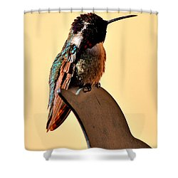 Shower Curtain featuring the photograph Juvenile Rufus Hummingbird Sitting It Out by Jay Milo
