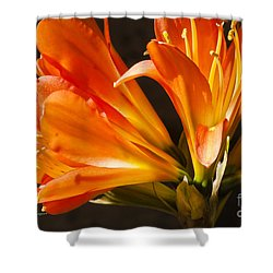 Kaffir Lily Glow Shower Curtain