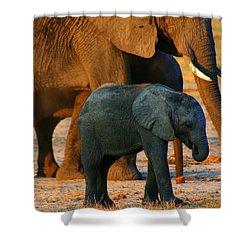 Shower Curtain featuring the photograph Kalahari Elephants by Amanda Stadther