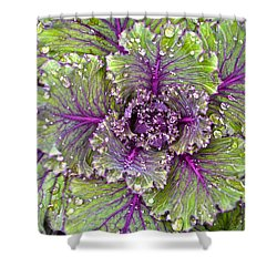 Kale Plant In The Rain Shower Curtain